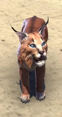 Eso Fashion Desert Lynx Elder Scrolls Online