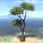 Tree, Sturdy Jungle