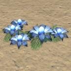 Wedding Blossoms, Blue