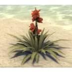 Flower, Healthy Hibiscus