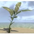 Plant, Palm Fronds