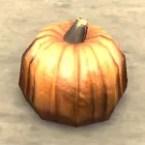 Sugar Pumpkin, Wax