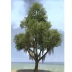 Tree, Mossy Summer