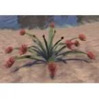 Plant, Rosetted Sundew