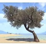 Fabricant Tree, Electrum