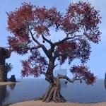 Briarheart Tree, Replica