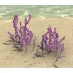 Flowers, Violet Bellflower