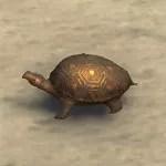 Hlaalu Trinket Box, Curious Turtle
