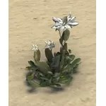 Flowers, Lizard Tail