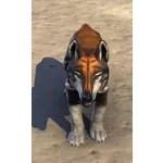 Helkarn Wolf Pup