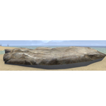 Limestone Shelf, Large