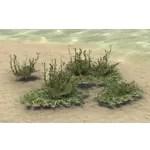 Plant, Pearlwort