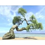 Tree, Summerset Spruce