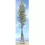 Tree, Young Poplar
