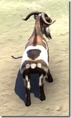 Wrothgar Buck Goat Rear