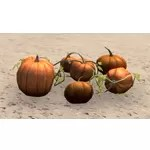 Pumpkin Patch, Display