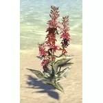 Plant, Cardinal Flower