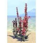 Plant Cluster, Bounteous Cardinal Flower