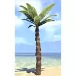 Plant, Marsh Palm