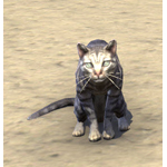 Senchal Striped Cat