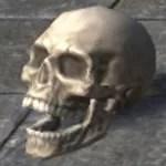 Skull, Human