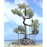Tree, Mire Mangrove