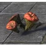 Mushrooms, Lavaburst Sprouts