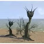 Plant Cluster, Marsh Nigella