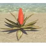 Plant, Flowering Desert Aloe