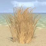 Desert Grass, Tall