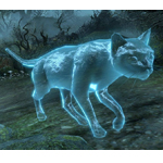 Ghostly Housecat