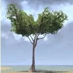 Tree, Tall Iroko