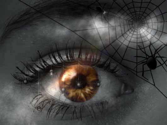Questa immagine ha l'attributo alt vuoto; il nome del file è significato-sognare-ragni.jpg