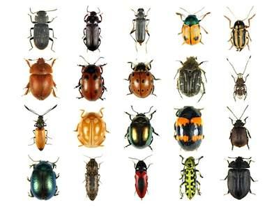 Questa immagine ha l'attributo alt vuoto; il nome del file è sognare-insetti-significato.jpg
