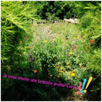 Essences Naturelles Corses