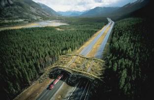 Puentes sobre naturaleza