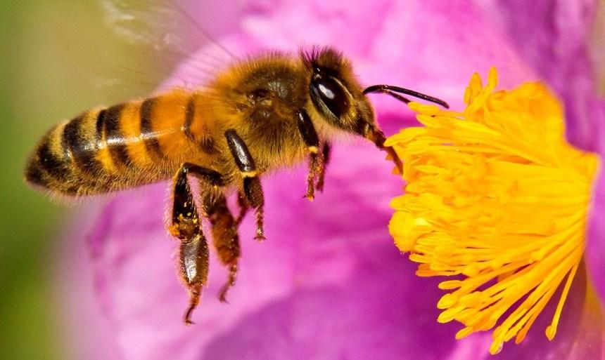 dia de las abejas