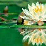 10 plantas y flores para cuidar la piel de forma natural