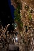 Temps de Flors-de nit