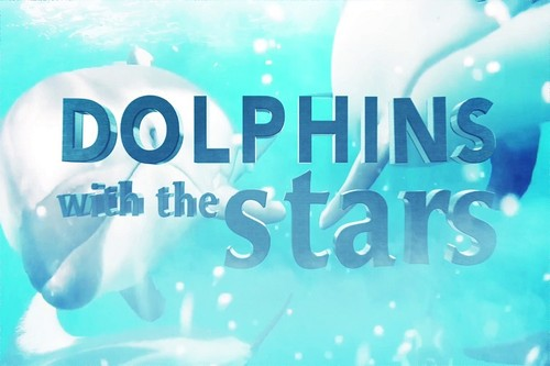 Dolphins-with-the-stars