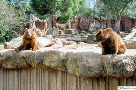 el zoo de madrid