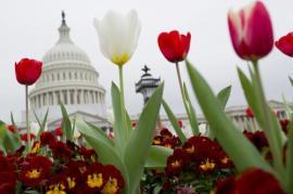 Primavera en Washington D.C.