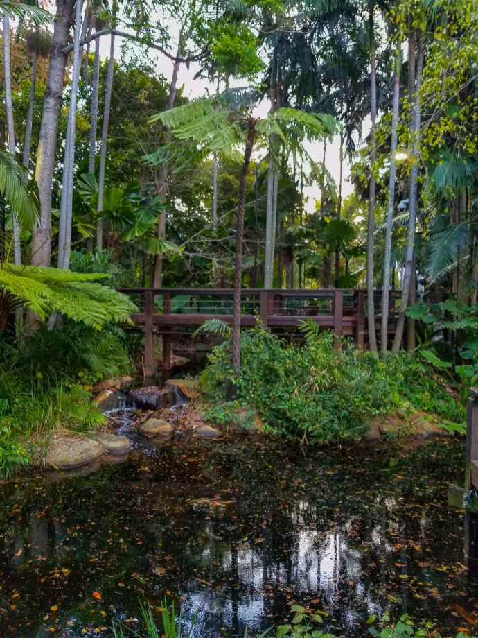 Rainforest Walk Brisbane