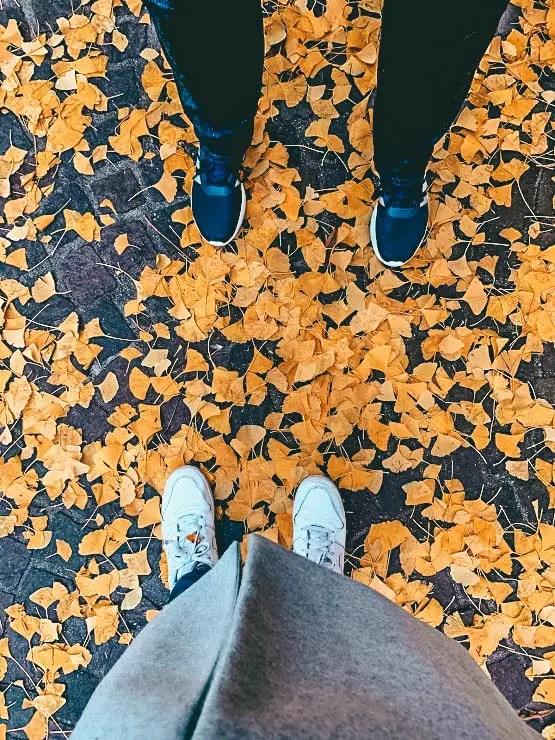 Bolonia en otoño