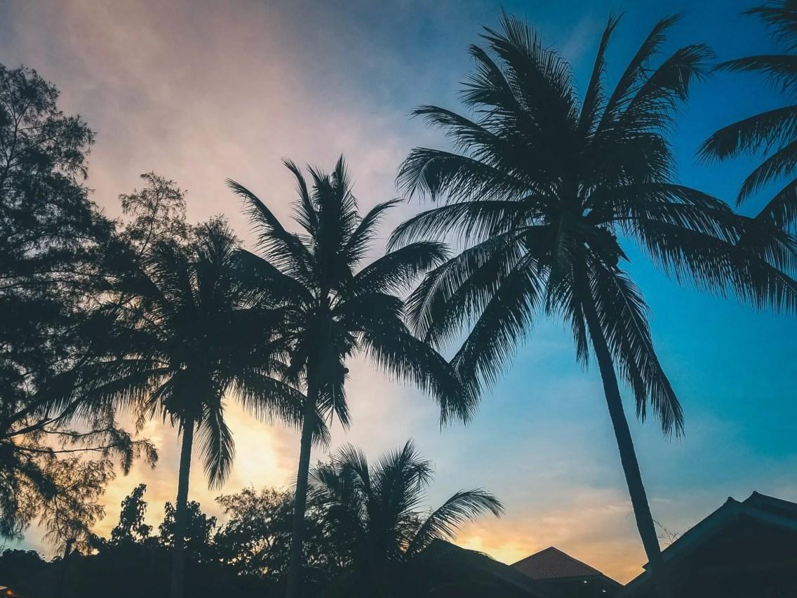 koh samui palmeras
