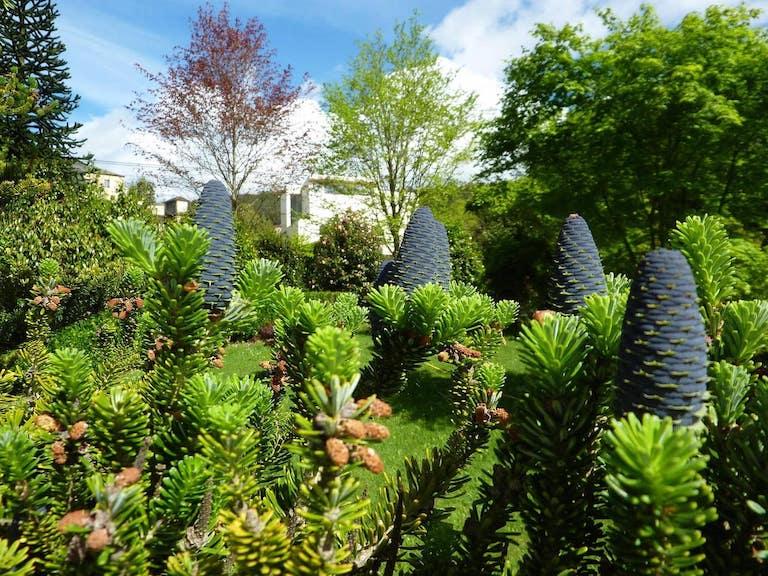 Jardín visto a través de unas ramas