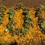 kvetinová výzdoba k príležitosti storočnice fubalu v Stropkove
