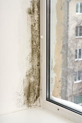 muffa-alle-finestre