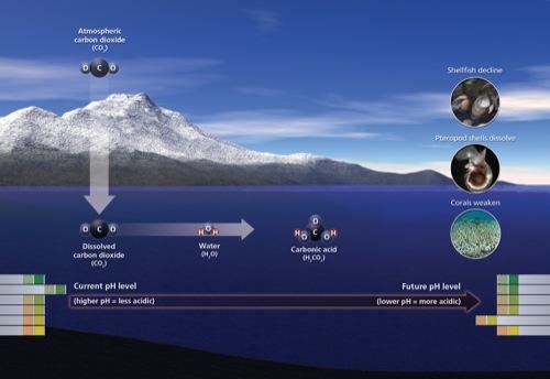 il clima - Cause ed effetti della CO2 spiegati in modo semplice anche da Luca Mercalli 6