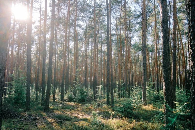 feng shui - Energia legno dalla teoria dei Cinque elementi 10